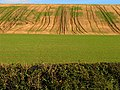 Patterned Farmland near Great Shefford - geograph.org.uk - 73752.jpg