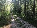 Payamatha Horse Trail 2.jpg