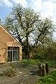 Perelaar in bloei op het domein Speelhoven te Aarschot - 369001 - onroerenderfgoed.jpg