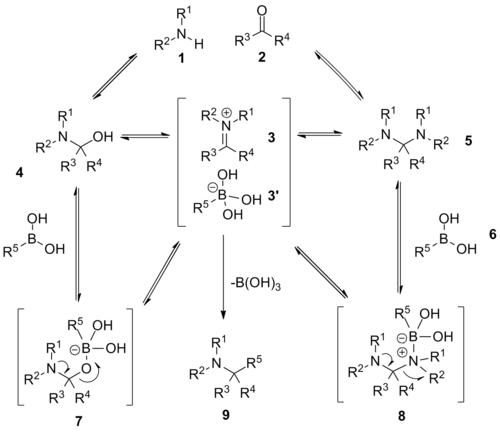 Petasis reaction with equilibrium relationships