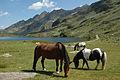 Pferde am Unteren Giglachsee.jpg