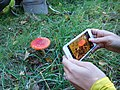 Photographing a Fly Agaric on a Fungus Foray.jpg