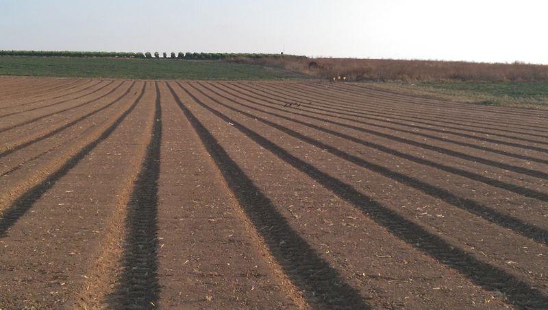 שדה חרוש