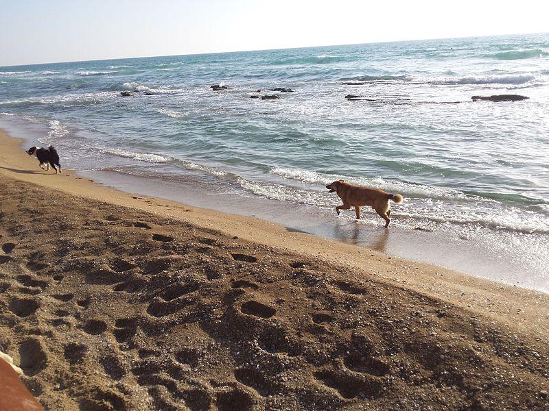 חוף הים בנתניה, כלב על שפת הים