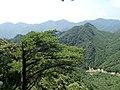 Pinus wangii ssp kwangtungensis, Ruyuan, Shaoguan, Guangdong, China 2.jpg