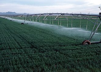Wheat production in the United States - Center pivot irrigation on wheat growing in Yuma County, Colorado