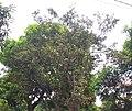 Planet Ananas.jpg