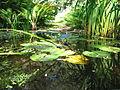 Plantes aquatiques 2.JPG