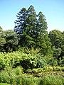 Plas Tan y Bwlch gardens - geograph.org.uk - 520074.jpg