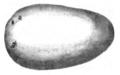 Pomme de terre caillou blanc Vilmorin-Andrieux 1883.png