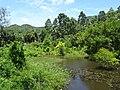 Pond in Ko Pha Ngan.jpg