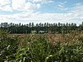 Poplars, Intwood - geograph.org.uk - 44802.jpg