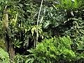 Praha, botanická zahrada, Fata Morgana - panoramio (8).jpg
