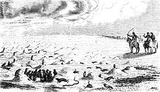 Keystone species - Prairie dog town. Drawing by Josiah Gregg, 1844