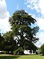 Preuilly-jardin-public-cèdres.JPG