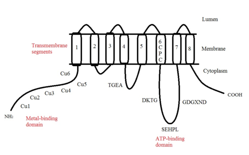 Px Proposed Structure Of Atp A