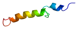Structure of the PTH protein. Based on PyMOL r...