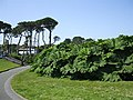 Queen Mary Gardens, Falmouth - geograph.org.uk - 465539.jpg