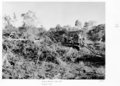 Queensland State Archives 4440 Wandoan Lands clearing with dozer 1952.png