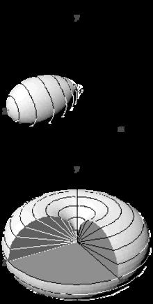T-antenna - WikiVisually