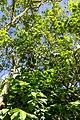 Rancho Español 32000, Dominican Republic - panoramio (25).jpg