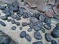 Rare stones called saligram.JPG