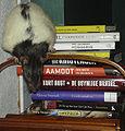 Rattus norvegicus with books.jpg