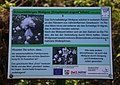 Recker Moor Eriophorum angustifolium Information Tablet 01.jpg