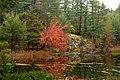 Red (1552014971).jpg