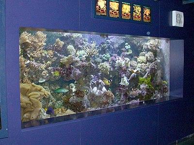 Marine reef aquarium at the London aquarium