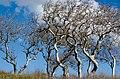 Refugio state beach trees.jpg