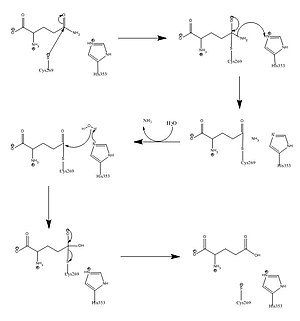 Carbamoyl phosphate synthetase I - Image: Removing ammonia