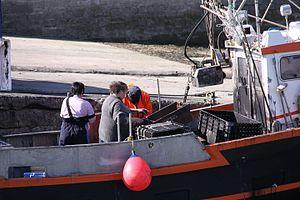 Retour de la pêche à la seiche du fileyeur Jason IV (36).JPG