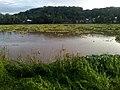 Rio Grande De Mindanao.jpg