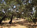 Riserva naturale orientata Bosco di Santo Pietro 03.jpg