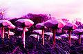 Riverside Mushrooms Twickenham.jpg