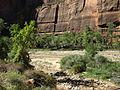 Riverside Walk to Zion Narrows, Zion Canyon, Zion National Park, Utah (8096063112).jpg
