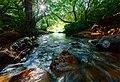 Roadside Brook (159357003).jpeg