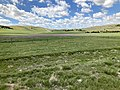 Robidoux Pass Spring 2021.jpg