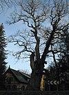Roebel Forsthaus Hagen.jpg