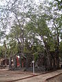 Ross Island Andaman 4140022.JPG