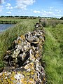 Ruined lichen covered river-side wall - geograph.org.uk - 522035.jpg