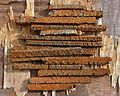 Rusty scraps of iron.jpg