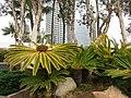 San Diego, CA, USA - panoramio (8).jpg