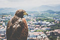 San Sebastian, Spain, eagl.jpg