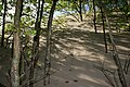 Sand og træer i kamp - panoramio.jpg