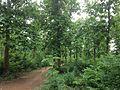 Saptasajya Teakwood Garden.JPG