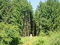 Schneise (forestry aisle).JPG