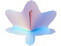 Schrödinger's flower.png
