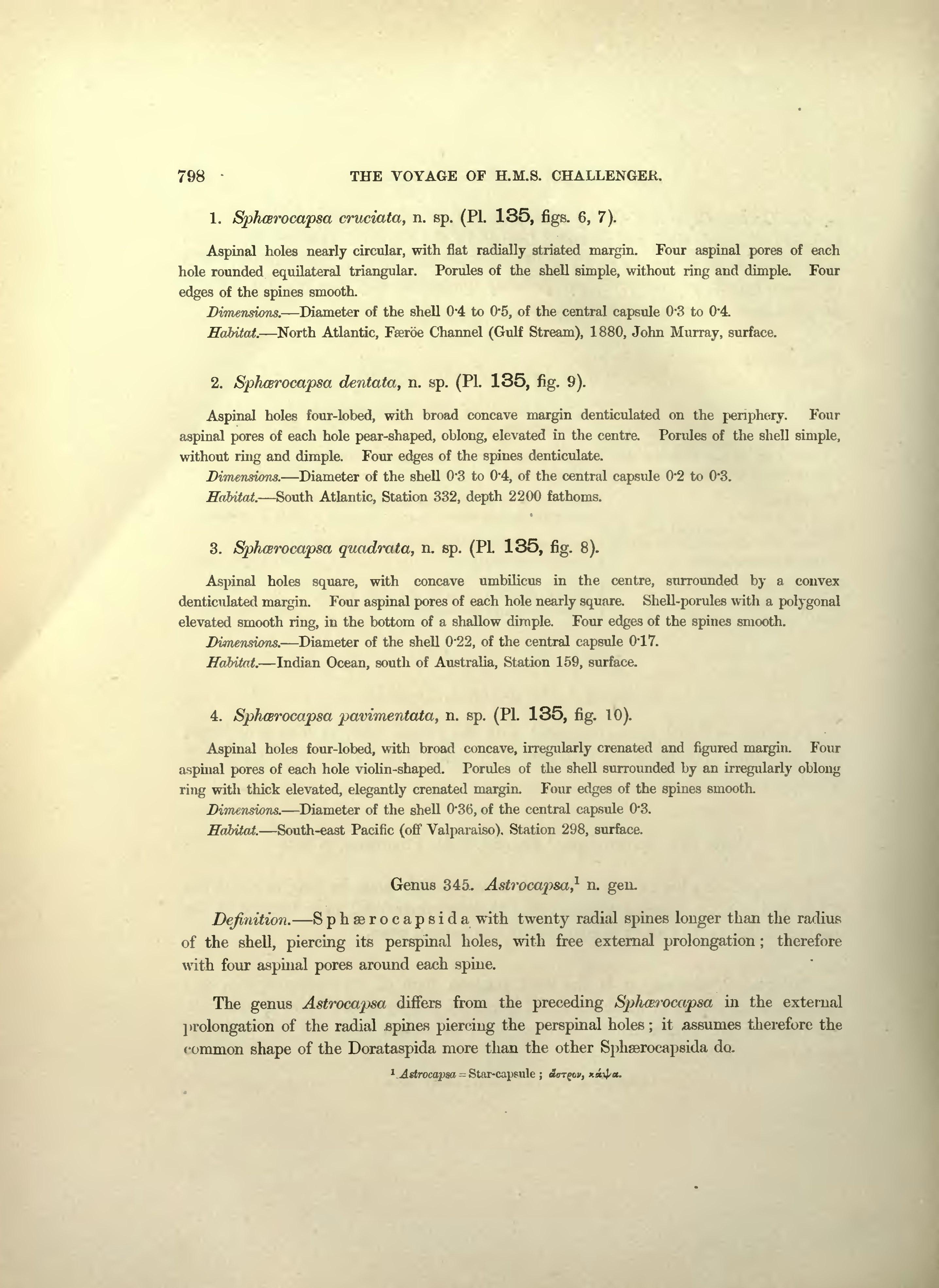 Page:Scientific results HMS Challenger vol 18 part 1 djvu/1006